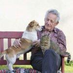 las-mascotas-y-la-tercera-edad
