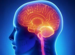 La glándula pineal que se encuentra en el cerebro es la encargada de segregar melatonina. Se ha podido demostrar que un suplemento de melatonina puede aumentar la capacidad de recuperación cerebral y de mejora cognitiva. Un estudio con participación de investigadores españoles, brasileños o australianos desvela que la melatonina podría ser un potencial tratamiento en enfermedades neurodegenerativas. Según el estudio, la melatonina en la memoria ejerce un efecto protector conforme el cerebro envejece. Así podría reducir la posibilidad de desarrollar alzhéimer o en aquellos que se haya desarrollado, protegerlos contra la degeneración neuronal. El estudio se ha realizado con un grupo de ratones de 6 meses. Unos estaban sanos y otros con alzhéimer. Fueron tratados con 12 mg por kilo de peso y día de melatonina durante 12 meses. En cuanto a los resultados, todos los ratones mostraron mejoría en su comportamiento en general y aprendizaje. Los ratones que tomaron melatonina estaban menos ansiosos, reconocían más que los que no habían tomado la melatonina. Esto es debido a que sus conexiones neuronales se optimizaron por efecto de la melatonina. El estudio ha demostrado que la melatonina reduce la inflamación de los ratones transgénicos y no transgénicos que la tomaron. Los pacientes con alzhéimer sufren a menudo alteraciones en el sueño, los tratamientos con melatonina pueden mejorar este problema. La melatonina es una hormona natural, que se segrega durante el sueño. La exposición a la luz solar no reactiva la segregación de melatonina. Esto no solo provoca problemas de sueño si no otros como cardiovasculares, diabetes, digestivos, depresivos, etc. Los autores de los estudios establecen que todavía necesitan más estudios clínicos antes de mandar melatonina como prescripción médica. Podemos esperar que los fármacos usados en los ratones sirvan para las personas con aspectos moderados de la enfermedad. Les ralenticen la enfermedad en etapas tempranas. Hoy en día no existe u